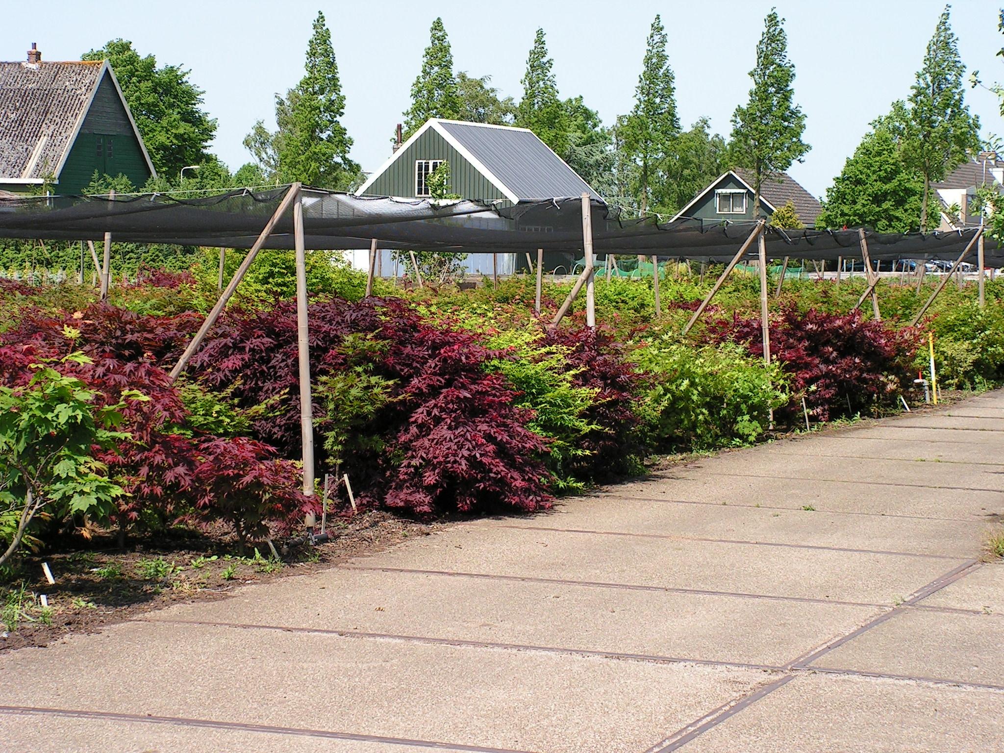 overzicht griffelplanten 2005