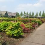 Kwekerij voorjaar