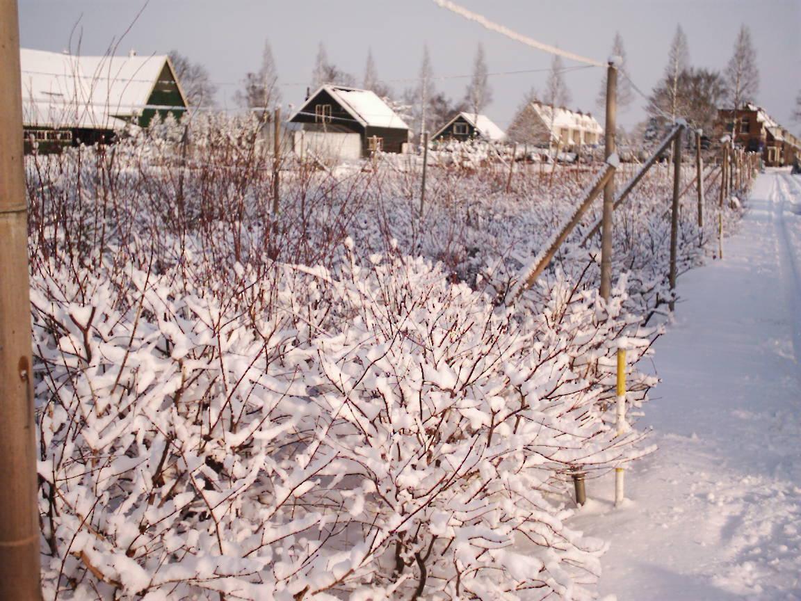 Kwekerij winter